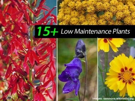 49 best gardening images on pinterest flowers gardening for Low maintenance garden plants and flowers