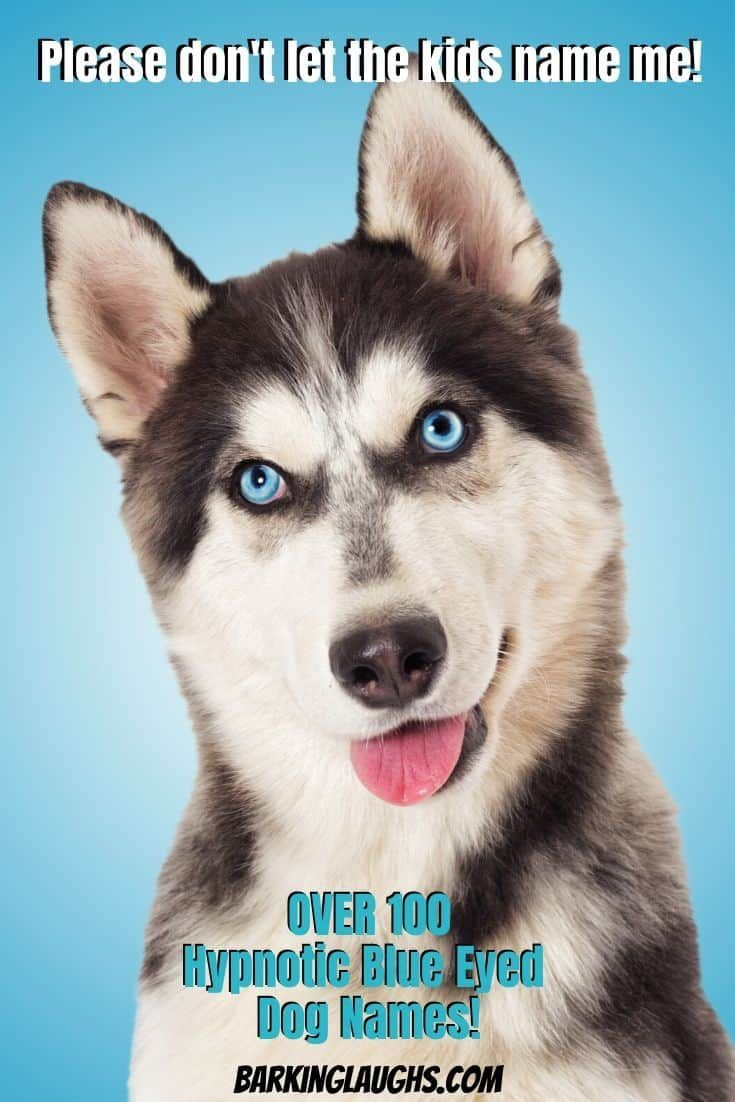 Over 90 Of The Most Hypnotic Blue Eyed Dog Names In 2020 Blue Eyed Dog Dog Names Blue Eyed Dog Names