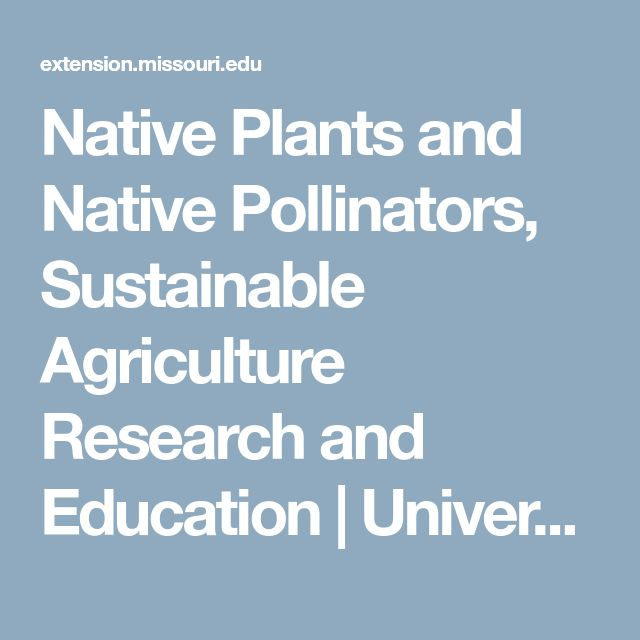 Native Plants And Native Pollinators, Sustainable Agriculture Research And  Education | University Of Missouri Extension