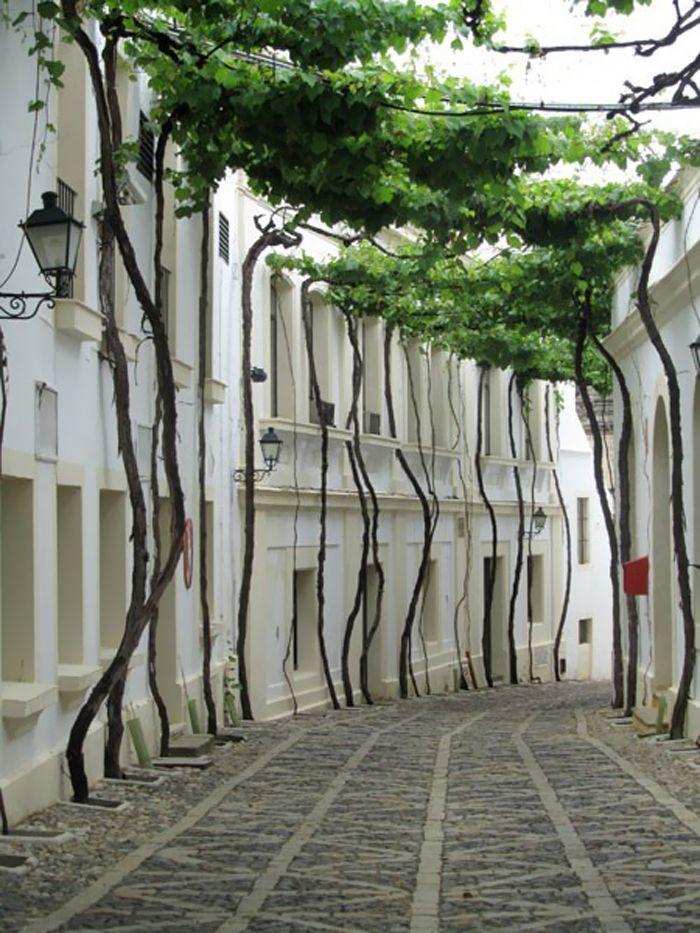 Grönt gatutak: Valencia Spain, Grape Vines, Trees Canopies, Travel, Places, Architecture, Natural, Grapevines, Photo