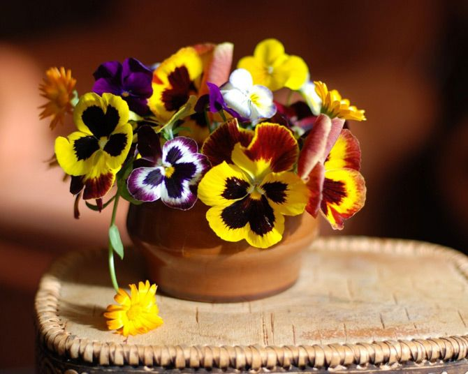 beautiful_pansy_flower_pictures_3.jpg