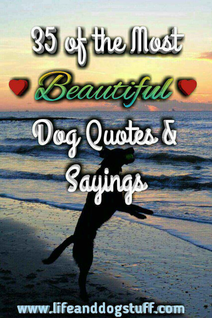 35 of the Most Beautiful Dog Quotes and Sayings. dog quotes | dog quotes love | dog quotes inspirational | dog sayings | dog sayings quotes | dog sayings love. #dogquotes