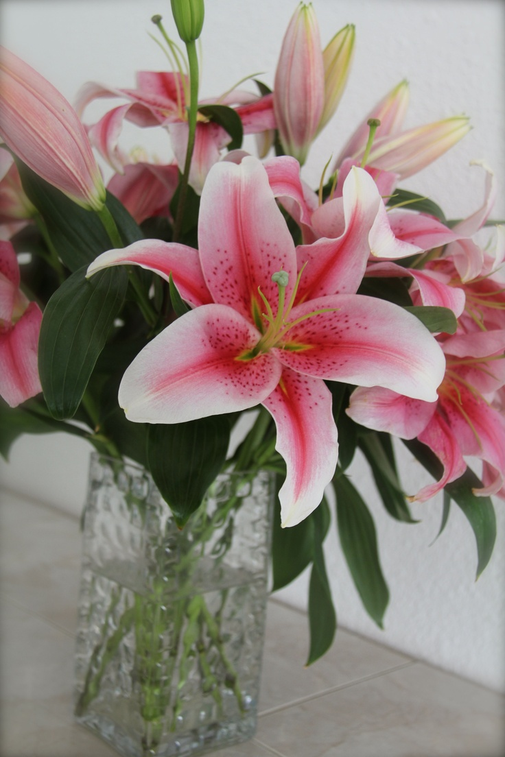best how does your garden grow images on pinterest flowers