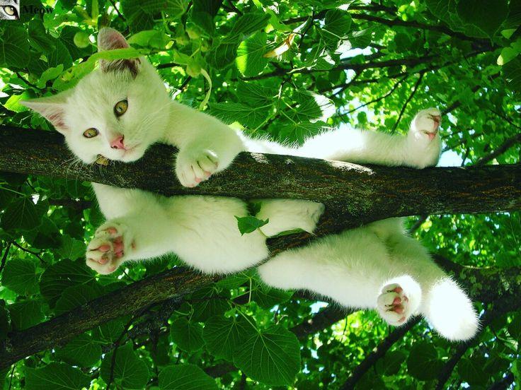 Kitten up in the tree  https://www.youtube.com/c/WeMeow #cat #cats #wemeow #meow #catlife #cutecat #catlove #lovecats #gatos #gatti #koty #katze #chats #kitty #kitten #kittens #lovecat #funnycat #cateye #beautifulcat #nicecat #amazingcat #catlooking #catofinstagram #catsoftumblr #catstagram #instapets #instacat #pet #pets