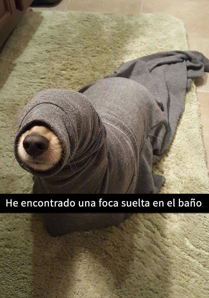 dios 0.0 un perro marino (?) :'v <3