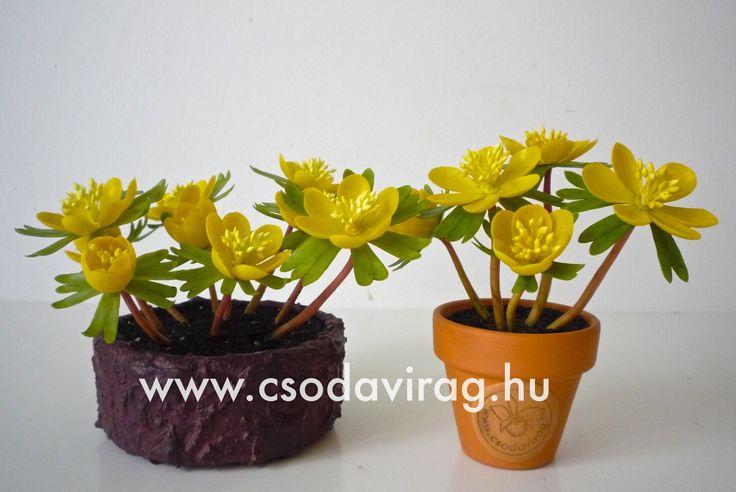Eranthis hyemalis (Téltemető) - My clay flower https://www.facebook.com/Csodavirag