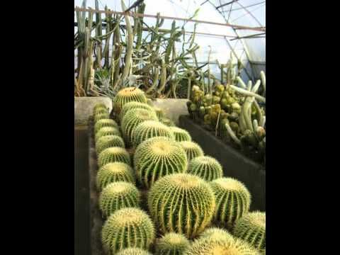 Amazing variety of roses & Cactus - Pine view Nursery, Kalimpong
