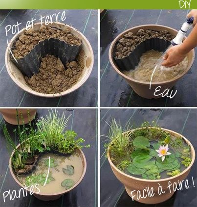 mini jardin aquatique garden pinterest gardens miniature gardens and miniature. Black Bedroom Furniture Sets. Home Design Ideas