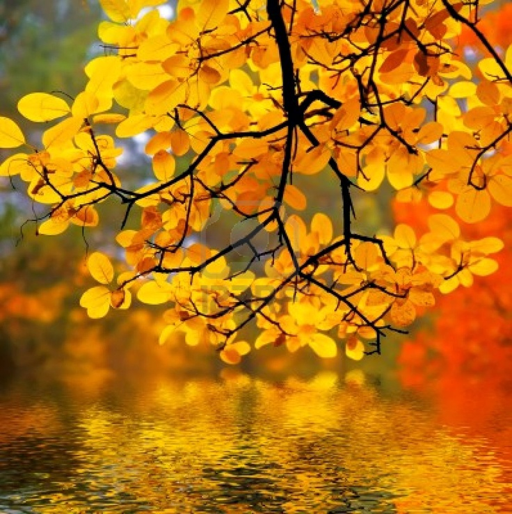 the reward of the end of summer - fall color!