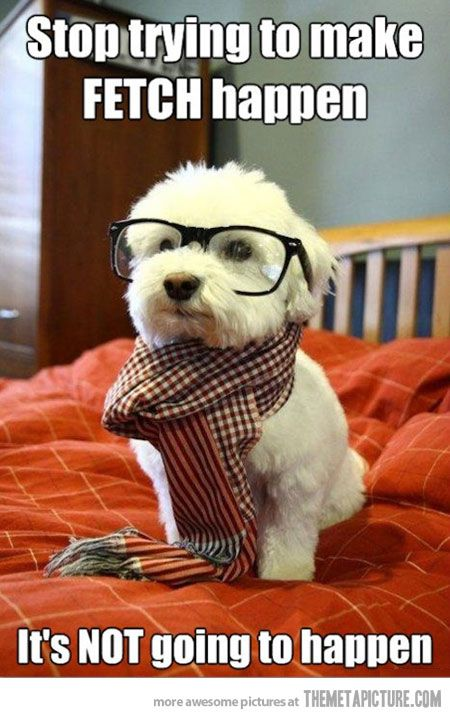 : Cutest Dogs, Dogs Memes, So Cute, Hipster Dogs, Hipster Puppies, Mean Girls, Socute, Animal, Hipsterdog