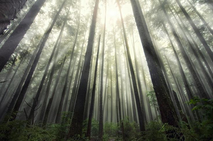 オリンピック国立公園 アメリカ、ワシントン州