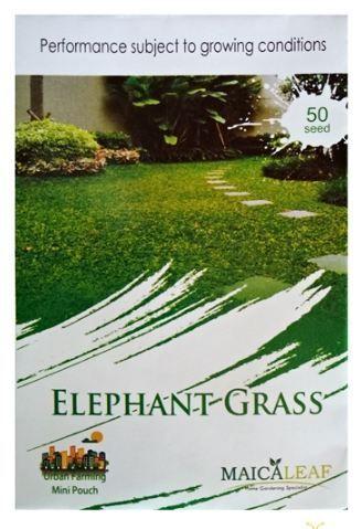 gambar jual benih rumput gajah    Jual Benih Rumput Gajah (Elephant Grass) 50 Biji – Maica Leaf    http://www.bibitbuahku.com/tanaman-hias-benih-rumput-gajah.htm
