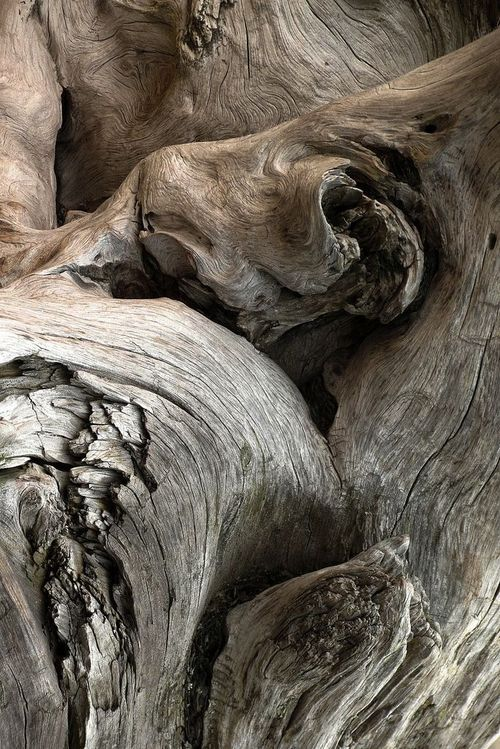 Gnarled Wood with sculptural shapes & rough textures; organic inspiration