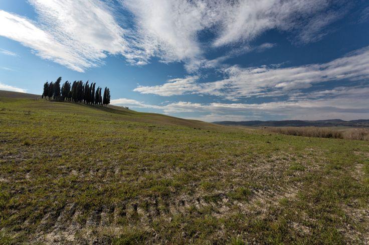 Cipressi. by Matteo Fortunato on 500px