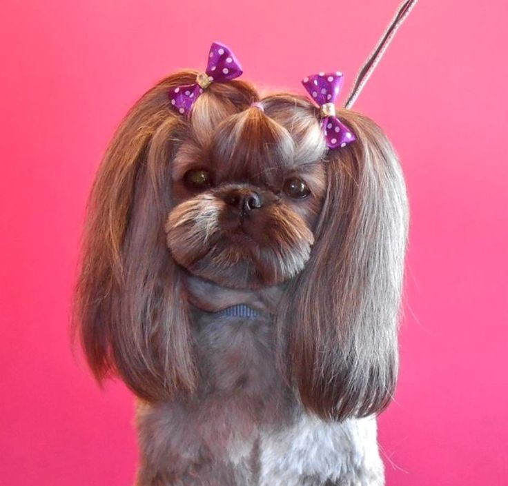 dog hair style 74 best shih tzu grooming hairstyles images on 1534 | 1b4acfb7683c8007473b2f14313f834a pigtails asian style