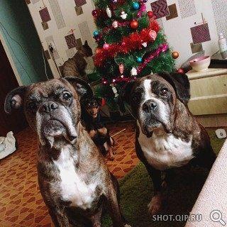 Всех с Новым годом поздравляют Баддик и Катрин из дома Солев.