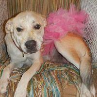 Waterloo, Indiana - Shepherd (Unknown Type). Meet Izzy, a for adoption. https://www.adoptapet.com/pet/21026818-waterloo-indiana-shepherd-unknown-type-mix