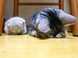 Cara Menghitung Dan Memperkirakan Umur Kucing Dengan Tepat Dan Benar | Japanindo Cute Culture