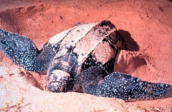 10 animais em extinção que podem desaparecer ainda este ano