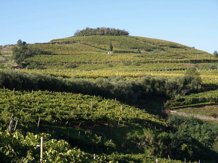 News - Strada del Vino Soave