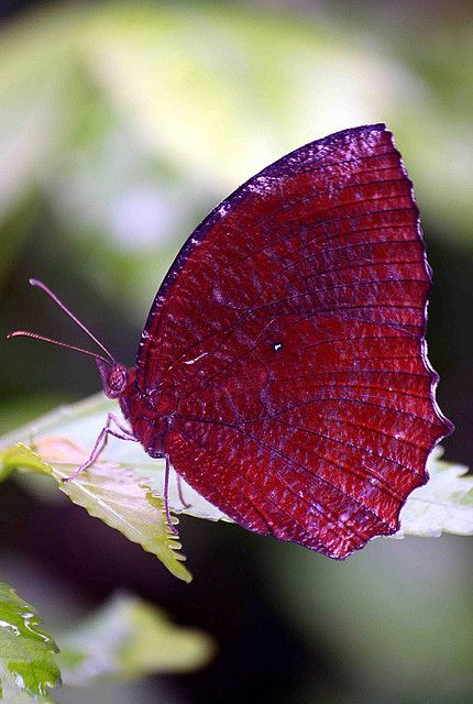 Butterfly In Tangerang, Indonesia