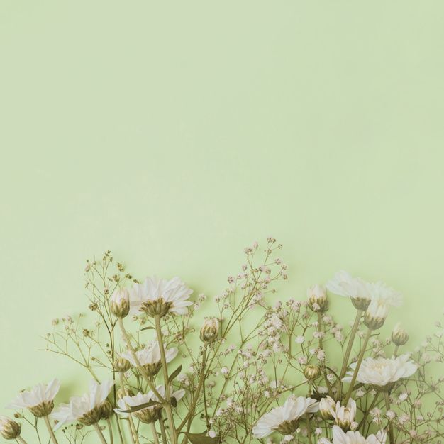 Download Aster And Baby S Breath Flowers At The Bottom Of Green Background For Free Watercolor Flower Background Smoke Background Green Backgrounds
