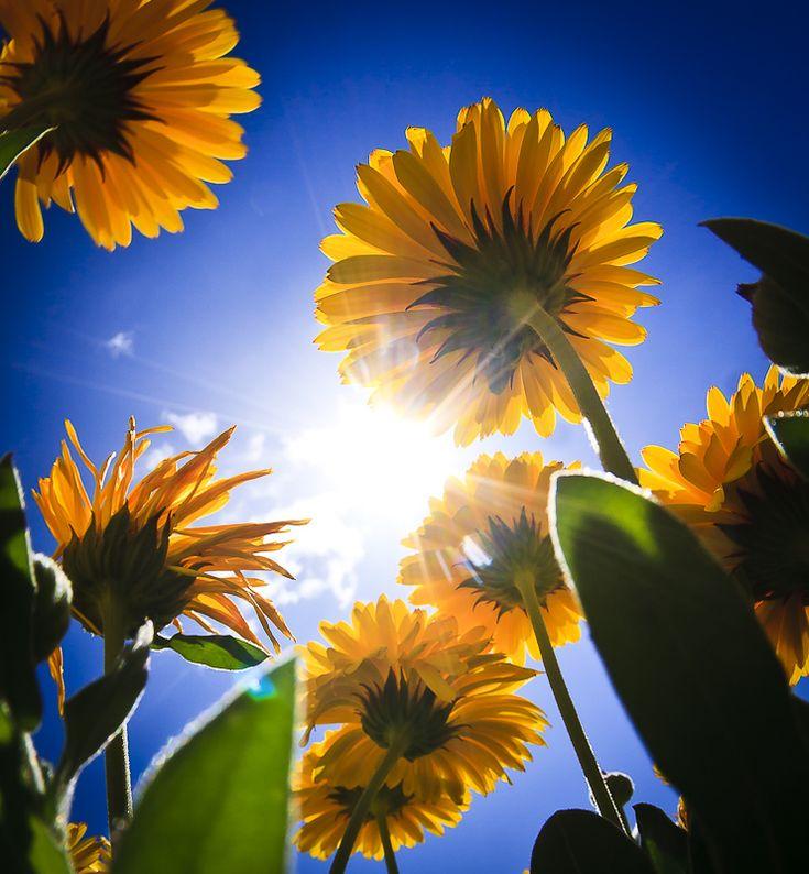 #Spring Sun #Flowers