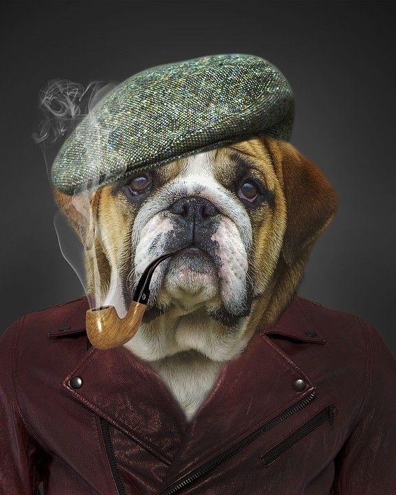 Прикольный портрет с собакой с сигарой #картинки #фото #животные #портрет #собаки #пес #сигара #крутость
