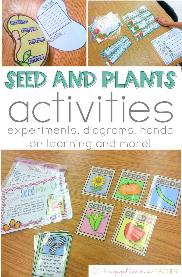 Seed Plant Life Cycle Activities Plant Activities Plant Life Cycle Plants Life Cycle Activities [ 1118 x 736 Pixel ]