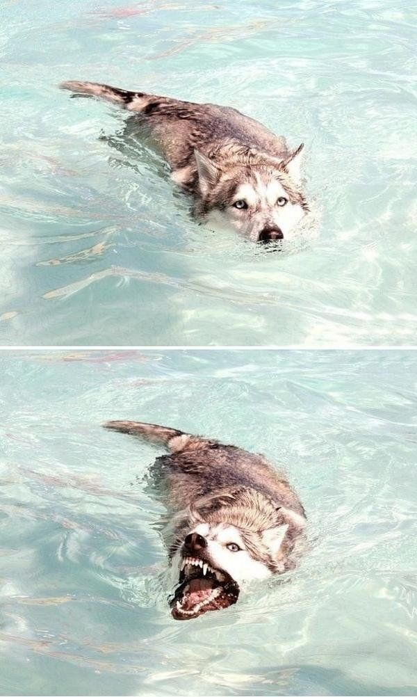 I told my dog he could do anything. So he became a crocodile.