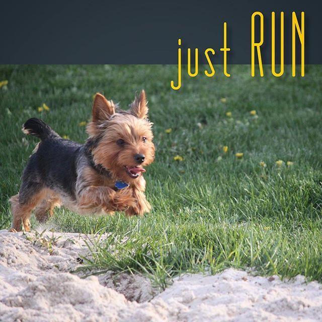 Day3.  Go, Dog. Go!  #CanineFitnessMonth