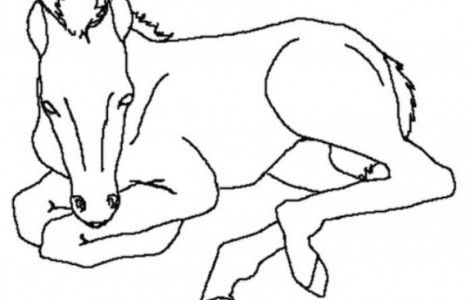 New Born Baby Horse Animal Coloring Pages For Kids