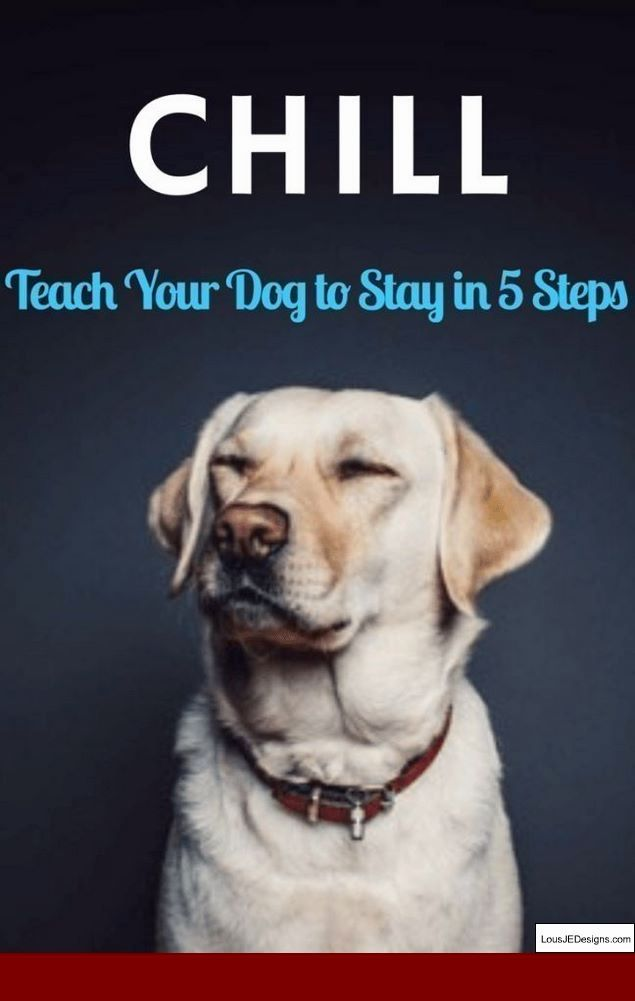 How To Train A Dog To Stay Near You And Pics Of Basic Dog Training