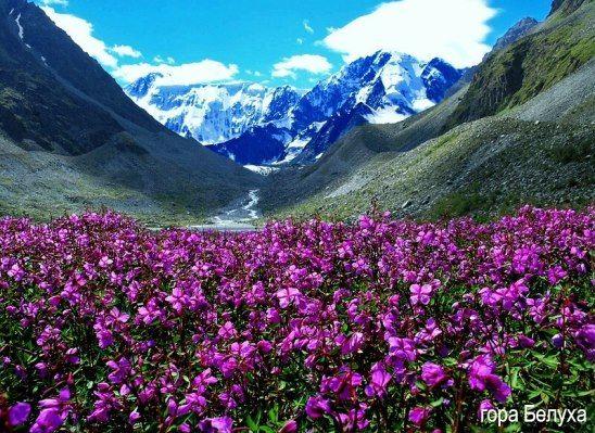 Горный Алтай. Гора Белуха.