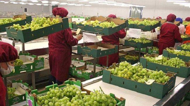 Exportaciones agroalimentarias de México a Canadá - http://www.notimundo.com.mx/finanzas/exportaciones-agroalimentarias-mexico-canada/