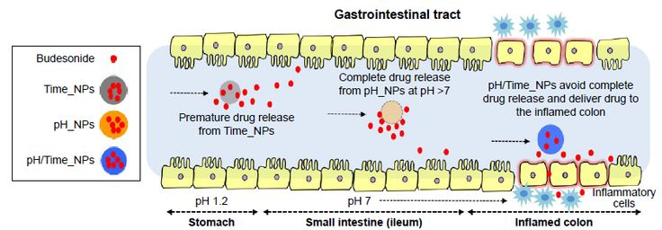 Figure 9 Proposed mechanism of budesonide release and colon-targeting of the single-systems (pH–NPs and Time_NPs) and dual-system (pH/Time_NPs) under GI tract mimicking conditions.