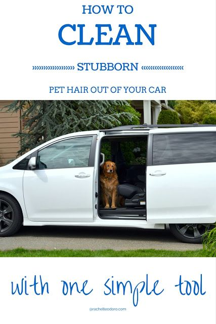 How To Get Stubborn Pet Hair Out Of Car