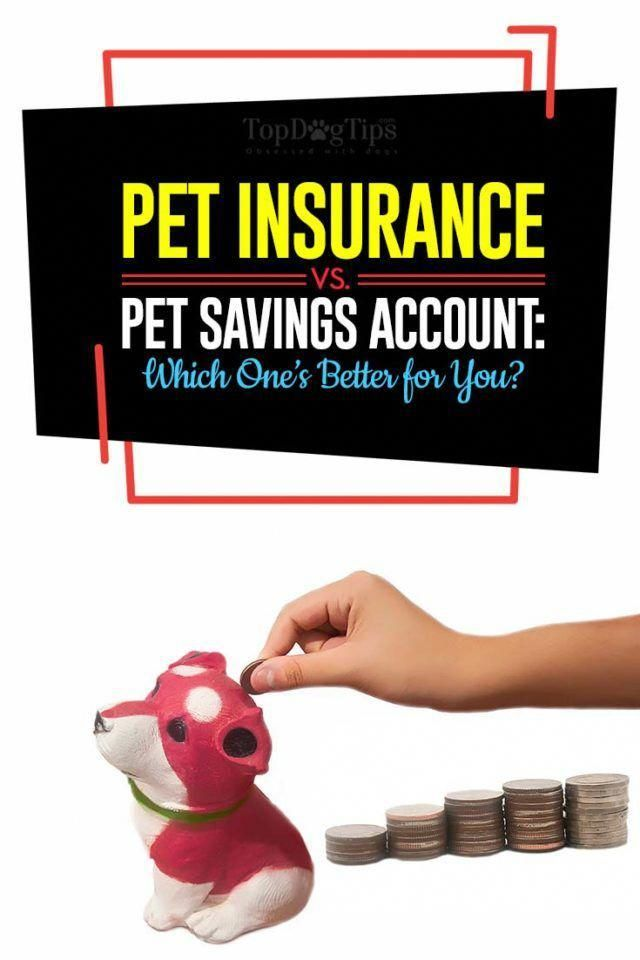 Supplemental Health Insurance Healthinsurance Health Insurance Pet Insurance Vs Pet Savings Account Which One S Better For You Pet Insurance Reviews Pet Health Insurance Cheap Pet Insurance