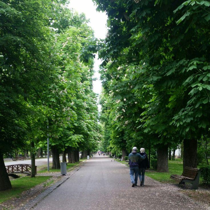 Central Park,Cluj