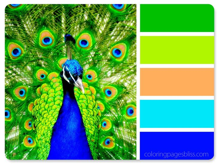 17 best ideas about peacock color scheme on pinterest
