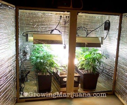 how to make a weed plant grow faster indoors