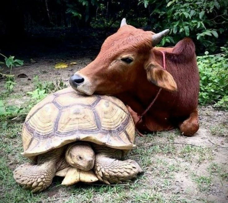 Best 25 Unusual Animal Friends Ideas On Pinterest