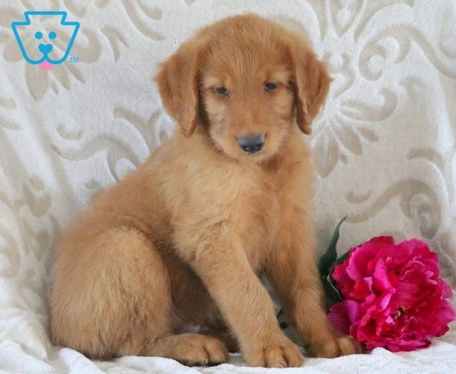 Puppy Finder Find Buy A Dog Today By Using Our Petfinder Newborn Puppies Puppy Finder New Puppy
