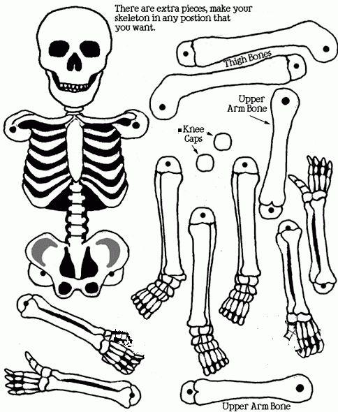 Esqueleto humano para imprimir y armar articulado - Imagui