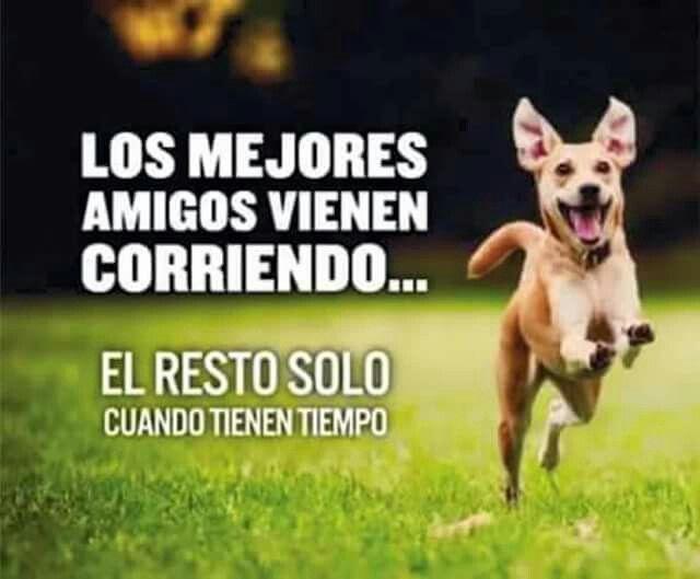 Busca el tuyo en San Miguel av.costanera , te persiguen estando tristes!!