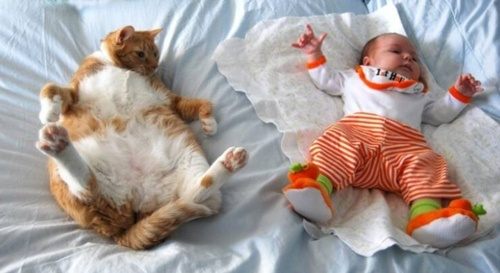 """Cat: """"I never said you could wear my clothes!""""    Baby: """"But, they don't fit you anymore!"""""""