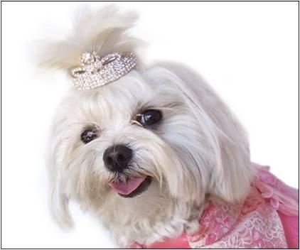 Tiaras For Big Dogs