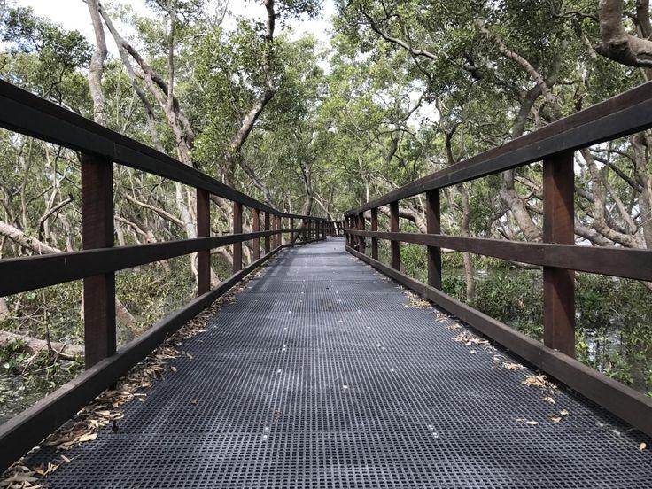 Wheelchair and pram friendy, the Wynnum Mangrove Boardwalk is one of the best kept secrets in Brisbane winding from Fisherman Islands to the Brisbane River.