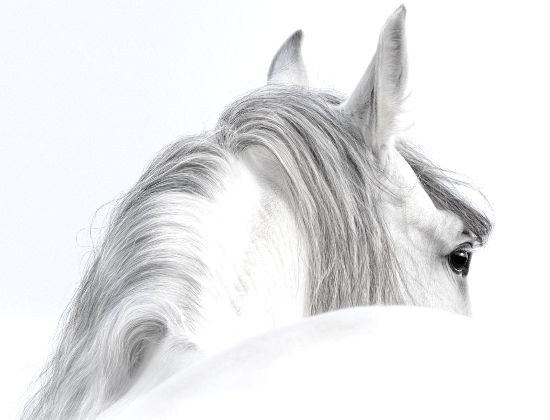 """Trust-your-Horse Meine Verpflichtung Nuno Oliveira hat das in Worte gefasst, was mir stets innere Verpflichtung war und ist:  """"Ich will alles daran setzen und mein Bestes geben, damit diese Pferde in ihrem freundlichen Wesen gut über mich urteilen und damit Harmonie walte, getragen vom Einvernehmen zwischen zwei Lebewesen.""""  (Nuno Oliveira)"""