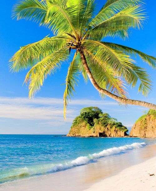 Palm Tree Beach: 73 Best I Love Palm Trees! Images On Pinterest